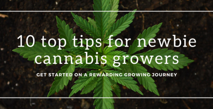 marijuana background banner tips for growing cannabis